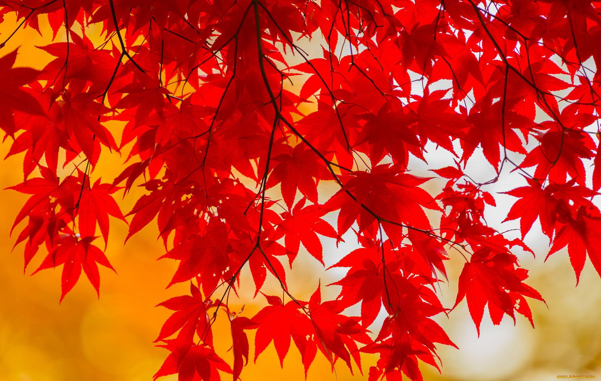 Красивый осенний лист картинки